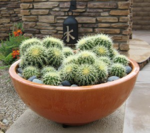 Orange pot filled with Golden Barrel Cactus.The Potted Desert