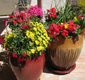 Desert Container Garden Choosing the right pots