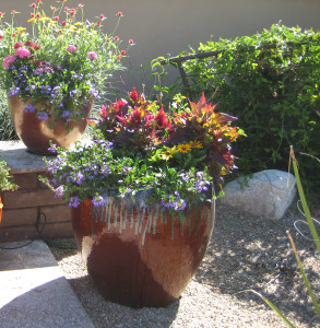 July color in desert pots by the Potted Desert