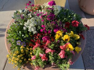 Winter flowers in a desert container from The Potted Desert