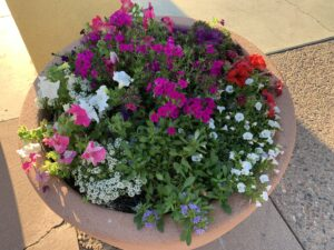 Plant winter flowers in pots for color all season