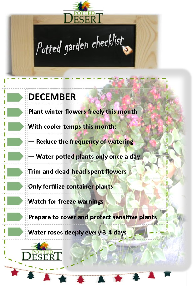 Keep up with your December tasks in your desert container garden