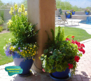 Winter Pots in April by the Potted Desert