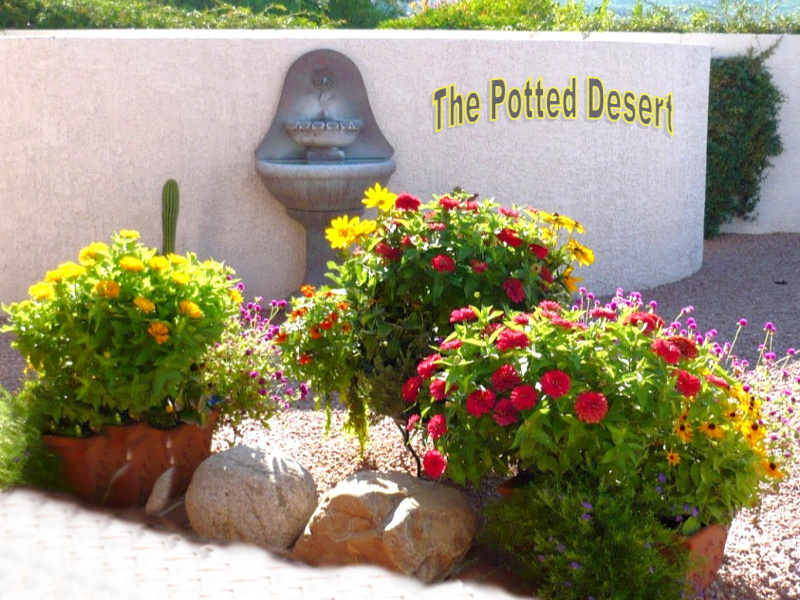 A Collection of 3 pots for a summer desert planting The Potted Desert