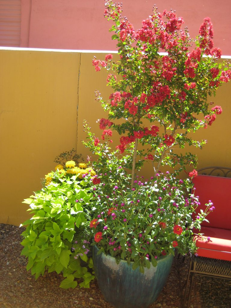Late Summer Potted Garden with Crepe Myrtle