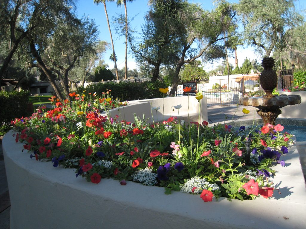 A Raised Bed of Flowers in Scottsdale AZ in the winter