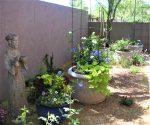 Container Garden DIY with online consultation