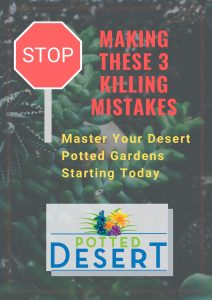 Master your magnificent desert pots.The Potted Desert