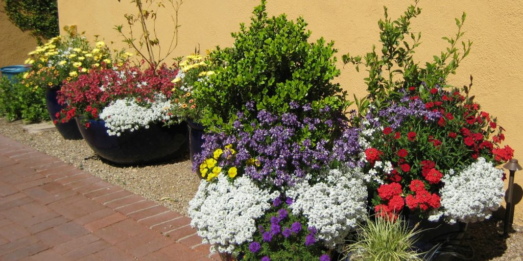 With the right care, your desert pots can be a gorgeous arrangement of color such as this primary color combination by the Potted Desert