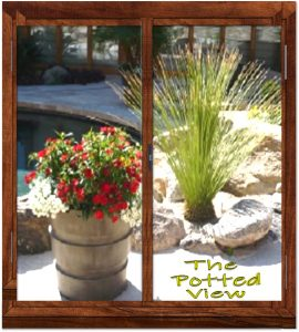 Subscribe for Potted View Premium Newsletter.The Potted Desert