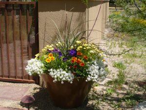 Critter Resistant desert pot with Red Yucca, Osteospermum adn White Alyssum