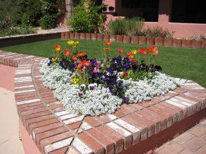 Winter Desert Garden Bed with Alyssum and Poppies