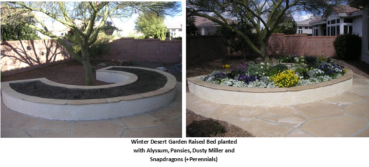 Before and after picture of raised bed with Winter Desert Garden Raised Bed planted with Alyssum, Pansies, Dusty Miller and Snapdragons