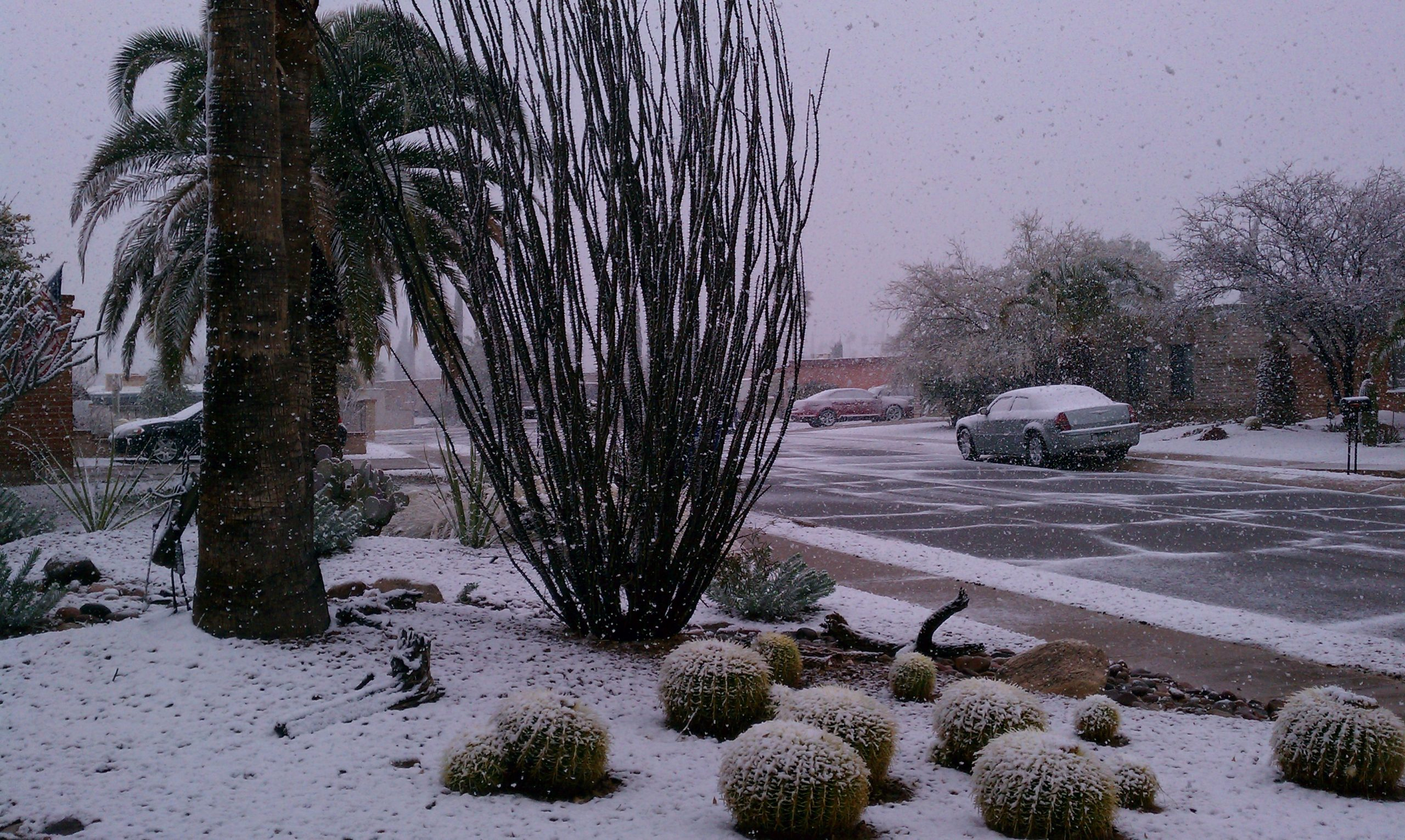 Snow in the desert can be a cause for alarm. Potted Desert