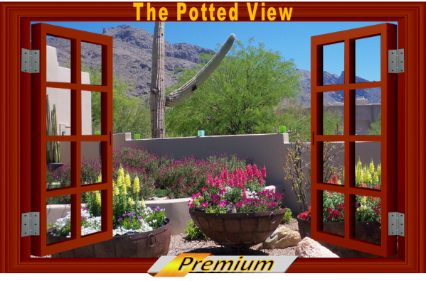 View out to a desert container garden. The Potted Desert