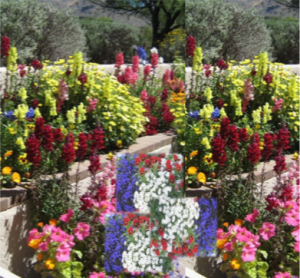 Grouping too many colors in one area.The potted desert