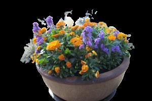 Orange Calendula with Blue Pansies and Johnny Jumpups (Violas)
