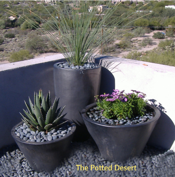 Contemporary Mix - Hand Water or Irrigate by The Potted Desert