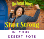 Start Strong with the Potted Desert