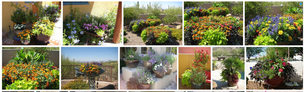 Summer Success in Marylee's Pots by The Potted Desert