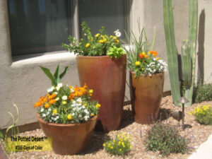 Trio of copper pots by The Potted Desert