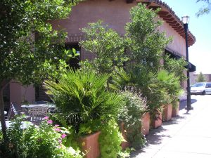 Large Planters create a barrier at a Tucson restaurant patio