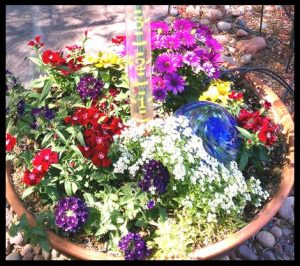 Too many colors makes a potted garden too busy