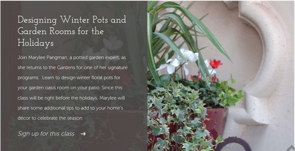 Marylee's Container Gardening Class November 8, 10-11:30am at the Tucson Botanical Gardens. Designing Winter Pots and Garden Rooms for the Holidays.